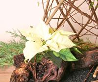 2e Advent Hemel raakt aarde 2015 200 breed ee795496-ff44-427e-bc76-f3c176e64286