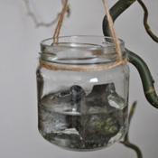 40dgntijd potjes water