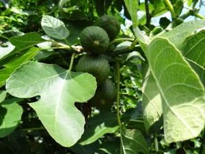 VruchtenDSC05581.jpgwebklein