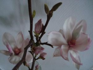 DSC06691webklein.jpg magnolia