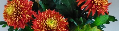 herfst voorbladDSC_13123.jpgwebklein