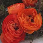 Koningsdag DSC03878 thumbnail