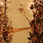 Week van gebed thumbnail 'In mijn Naam' _bewerkt-1